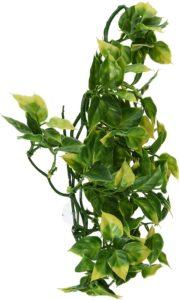 Terrarien Pflanzen