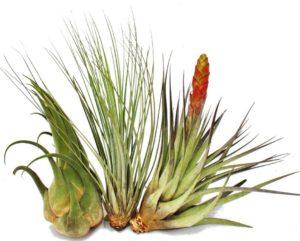 Terrarium Pflanzen